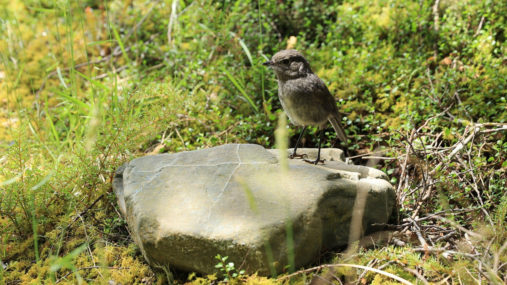 Image of a bird stood on a rock and taken with the Canon EOS 850D